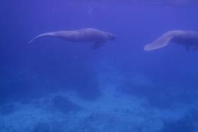 Snorkeling en Caye Caulker